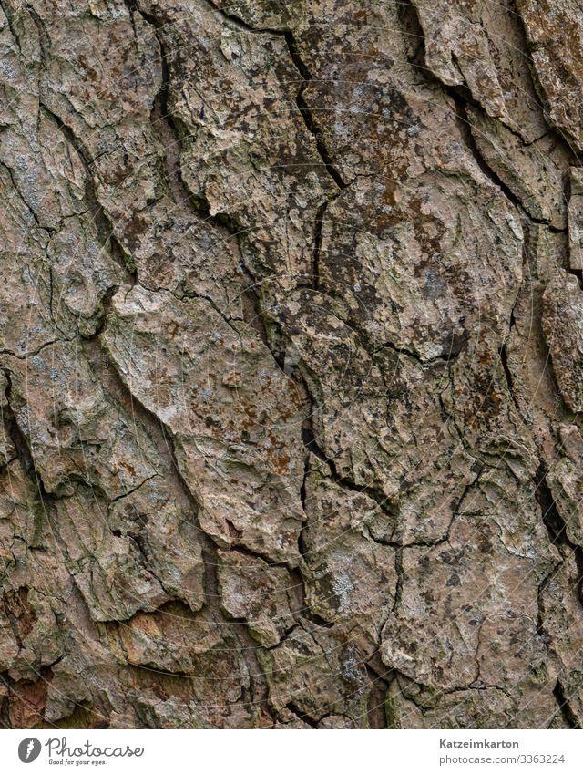 Rinde Umwelt Natur Tier Herbst Pflanze Baum Garten Park Wiese Wald Holz alt natürlich trocken Riss Baumrinde Haut Hintergrundbild Farbfoto Außenaufnahme