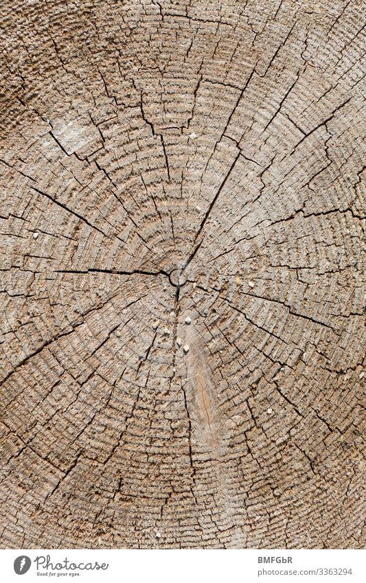 Holzschönheit Handwerk Baustelle Kunstwerk Stress Nostalgie Umwelt Umweltschutz Wandel & Veränderung Wege & Pfade Hintergrundbild Muster Strukturen & Formen