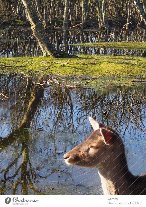 Sonnenanbeter Freiheit Natur Landschaft Wasser Winter Wald See Tier Wildtier Reh Rehkitz 1 Tierjunges Erholung genießen ästhetisch Freundlichkeit natürlich