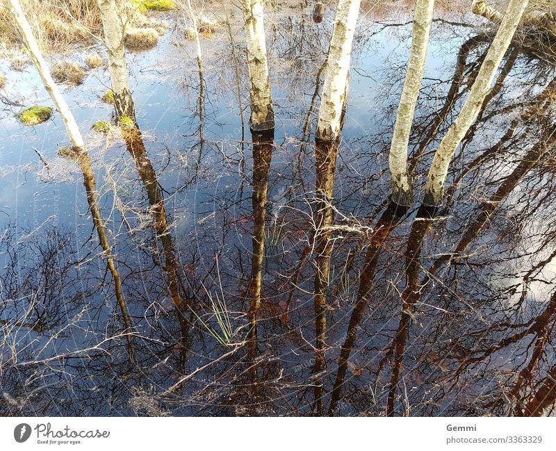 Land unter Winter wandern Natur Landschaft Pflanze Erde Wasser Baum Moos Birke Wald Moor Sumpf Hochwasser natürlich blau braun grün Meerestiefe Farbfoto