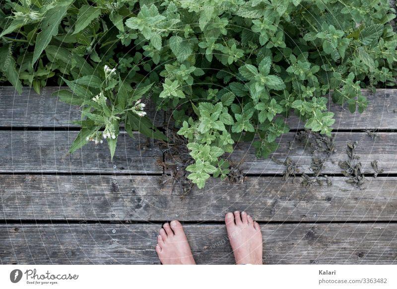 Zwei Füße auf Holz Terrasse mit Kräutern und Pflanzen Fuß Barfuß Sommer Kräuter & Gewürze draußen Außenaufnahme Zehen Mensch Gras Bodenbelag Melisse