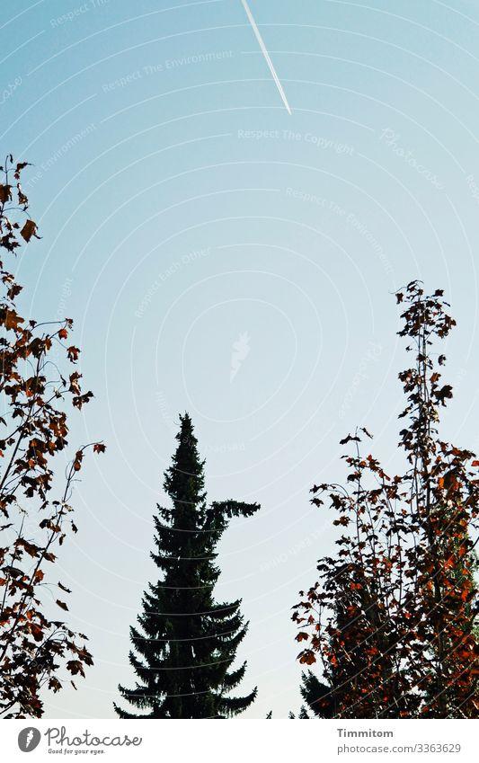 Baum, huldvoll Pflanze Himmel Wolkenloser Himmel Herbst Schönes Wetter Fichte Laubbaum Park blau braun grün schwarz weiß Überraschung Kondensstreifen Farbfoto