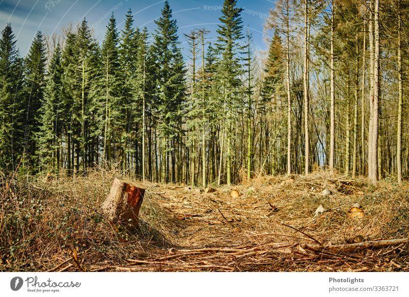 Abholzung Umwelt Natur Landschaft Erde Pflanze Baum Sträucher Grünpflanze Wald kaputt wild blau braun gelb gold grün orange schwarz Sorge Entsetzen fällen