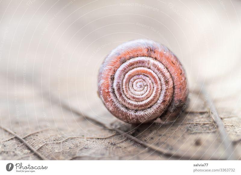 Schneckenhaus Blattstruktur Blattadern Spirale rund urform Symmetrie Natur Strukturen & Formen Makroaufnahme Schutz Design Pflanze Vergänglichkeit