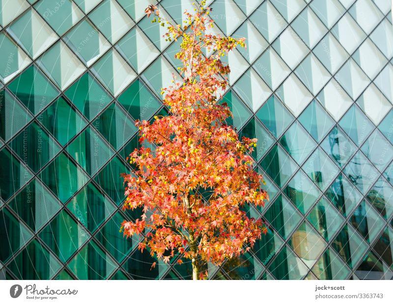 Baum im Herbst vor Glasfassade Architektur Gebäude modern Reflexion & Spiegelung verfärbt Bauwerk Kontrast transparente Fassade kreuzförmige Linien