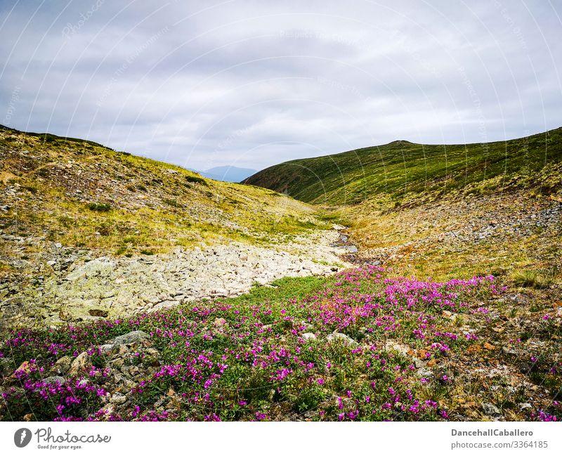 alpine Wiesenlandschaft mit Wolken Berge u. Gebirge Landschaft Natur Panorama (Aussicht) Tourismus Ferien & Urlaub & Reisen Yukon Kanada Blumen Außenaufnahme