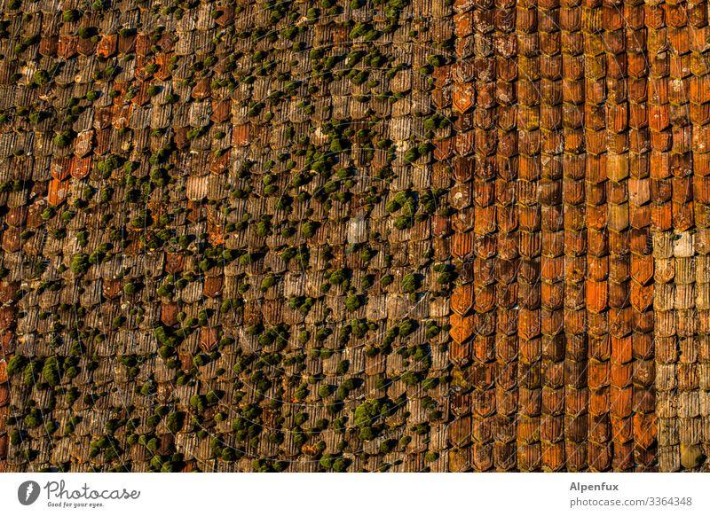 ohne Moos nix los Dach Ziegel Architektur rot moosbedeckt Moosteppich Farbfoto Außenaufnahme Ziegeldach Dachziegel Haus Menschenleer Reinigung