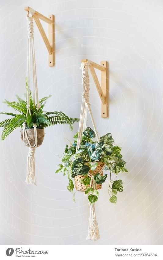 Zimmerblumen in Blumentöpfen, die an einer weißen Wand hängen. Topf Design schön harmonisch Haus Garten Dekoration & Verzierung Gartenarbeit Natur Pflanze Blatt