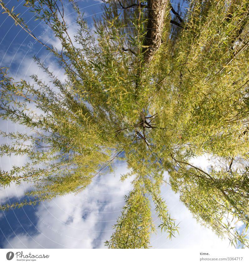 Frühlingsrauschen baum äste zweige grün frühling himmel wolken perspektive weide natur vegetation flora fröhlich glück inspiration stimmung neugier erwartung