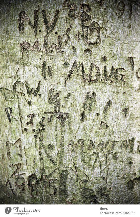 Lebenszeichen rätsel irritation botschaft geheim geritzt grafitti tageslicht rinde baum striche Buchstabe zahlen alt verletzung tattoo grün detail