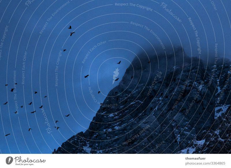 Gipfel im Nebel mit Bergdolen Abenteuer Ferne Winter Berge u. Gebirge Natur Landschaft Himmel Nachthimmel schlechtes Wetter Schnee Alpen Vogel Krähe Alpenkrähe