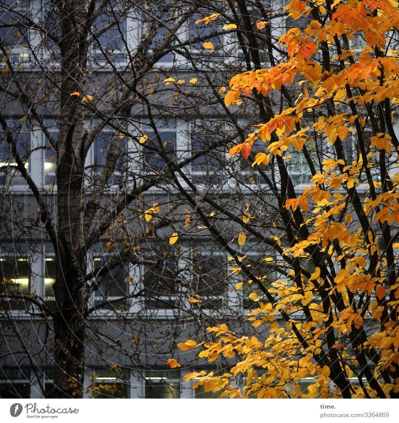 Verflechtungen (5) baum holz äste zweige verwirrung natur kommunikation baumstamm wachsen netzwerk verflechtung struktur urwüchsig sonnenlicht vegetation