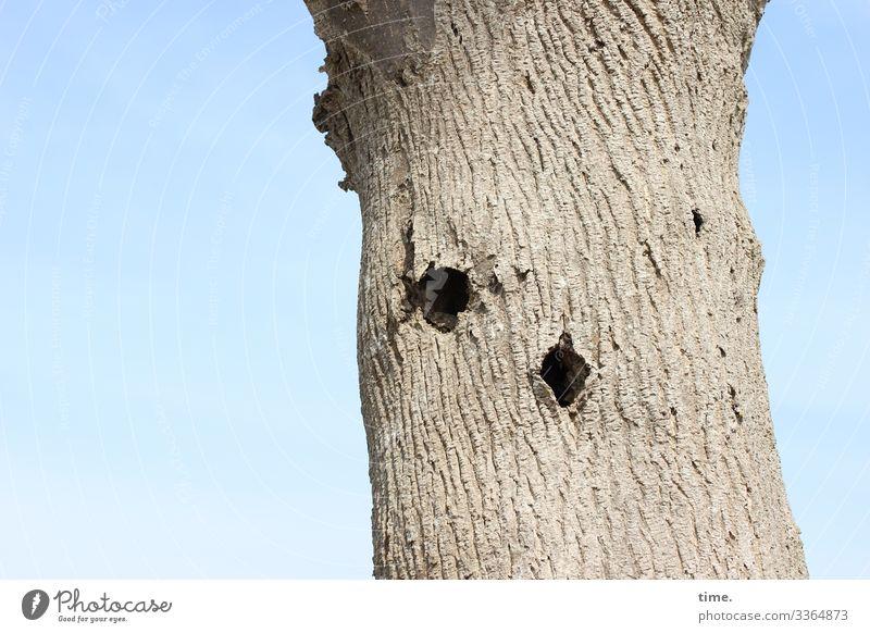 Neues vom Specht baum rinde himmel sonnenlicht löcher specht hell totholz skurril entdeckung überraschung nahrungssuche natur pflanze baumstamm alt allein