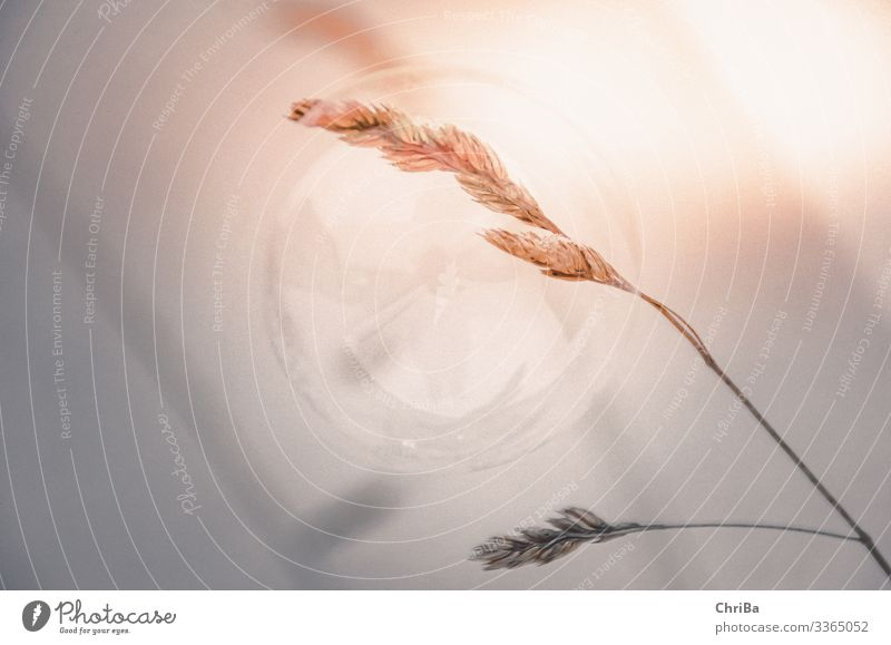 Seifenblasenträume Natur Pflanze schön Sonne Winter Umwelt Gefühle Glück Gras Garten orange grau Park Eis gold glänzend