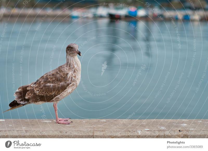 Möwe Umwelt Natur Landschaft Tier Sommer Küste Meer Pazifik Wildtier Vogel 1 blau braun grau grün rosa schwarz weiß Neugier Perspektive beobachten stehen warten