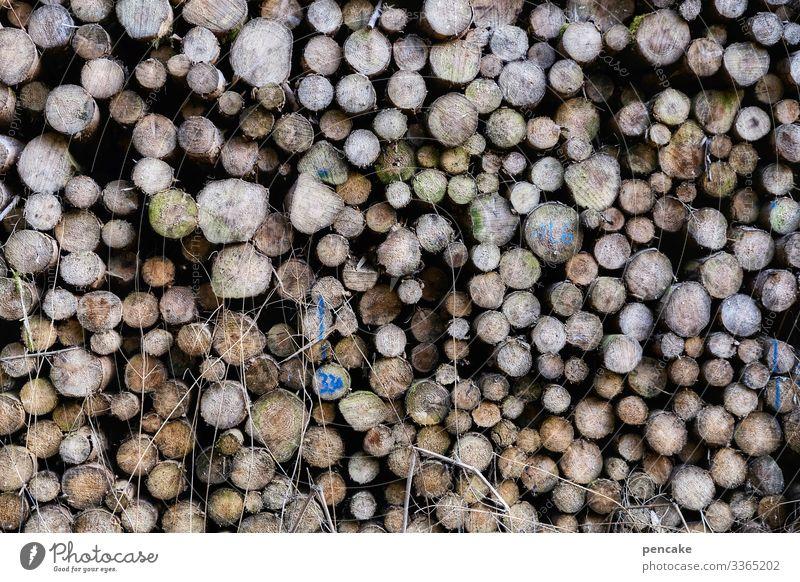 da ist doch der wurm drin! Holz Wald Holzstapel Vorrat Brennholz Forstwirtschaft Brennstoff Umwelt Energie Strukturen & Formen Stapel Baumstamm Totholz