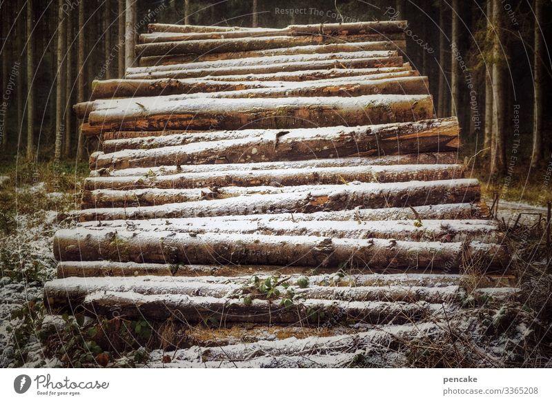 eiszeit   gelege Umwelt Natur Landschaft Urelemente Winter Klima Klimawandel Eis Frost Schnee Baum Wald sparsam Überleben Stapel liegen Baumstamm Holz Vorrat