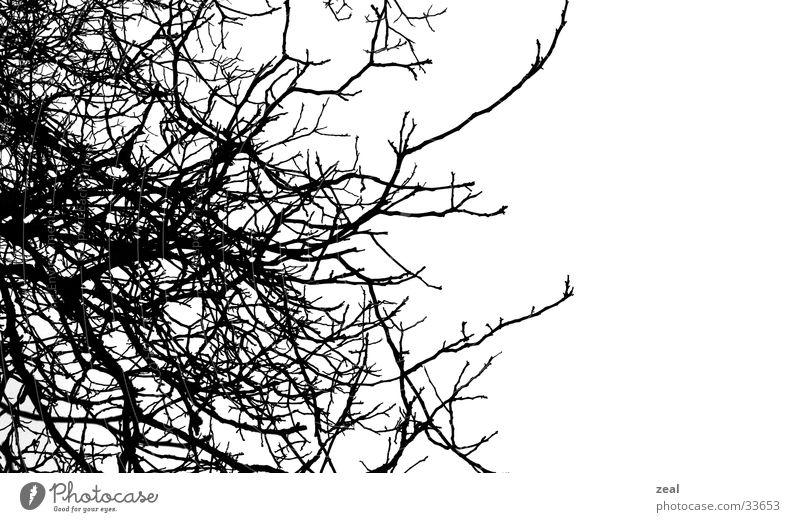 ::.. äste - thik ..:: Baum Winter verwurzelt Ast Kontrast Landschaft Natur Wurzel root