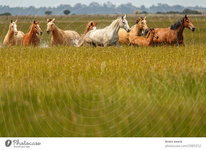 Wilde Pferde schön Freiheit Sommer Umwelt Natur Landschaft Tier Erde Park See Nutztier Wildtier Tiergruppe Herde rennen frei natürlich wild Willensstärke Macht