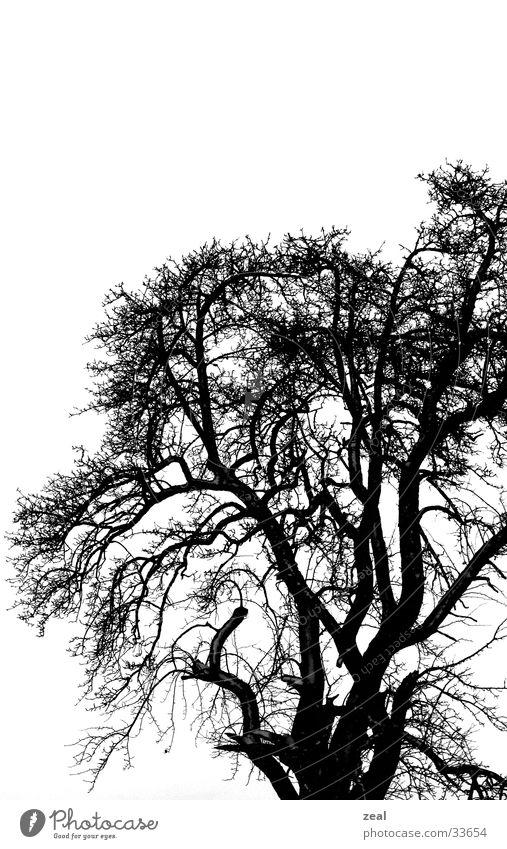 ::.. winter_tree ..:: Baum Winter trüb kalt trist dunkel Ast Schwarzweißfoto