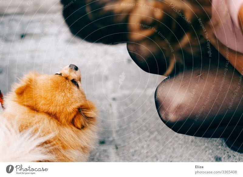 Eine Frau die vor einem niedlichen  kleinen Hund hockt mensch draußen begrüßen Fell beschnuppern Neugier Tier Haustier Tiergesicht Tierporträt Tierliebe Straße