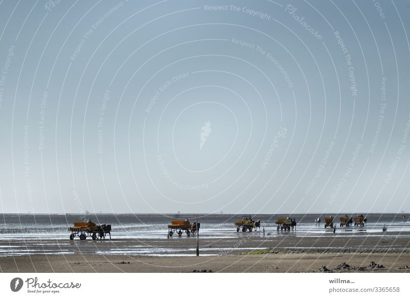 Wattwagen an der Norsee bei Cuxhaven Ferien & Urlaub & Reisen Tourismus Ausflug Abenteuer Sommer Sommerurlaub Wattenmeer Ebbe Kutschfahrt Pferdekutsche