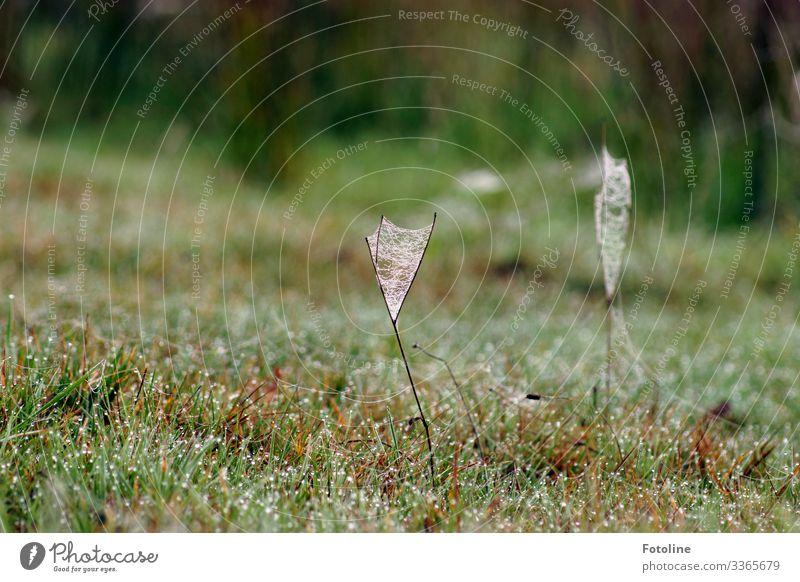 taufrisch Umwelt Natur Landschaft Pflanze Urelemente Wasser Wassertropfen Frühling Gras Garten Park Wiese nah nass natürlich braun grün weiß Tau Spinnennetz