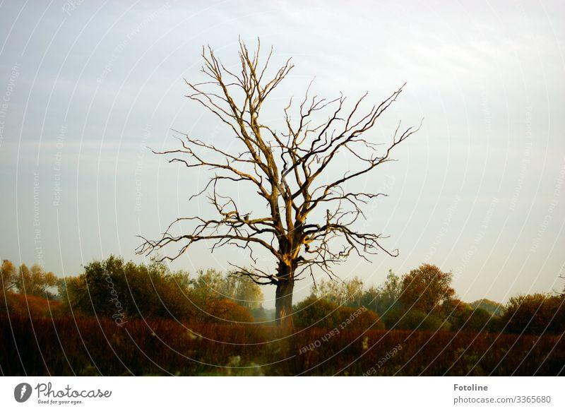 Lieblingsbaum Umwelt Natur Landschaft Pflanze Himmel Wolken Herbst Schönes Wetter Baum Sträucher Wildpflanze Park hell natürlich Wärme blau braun grün