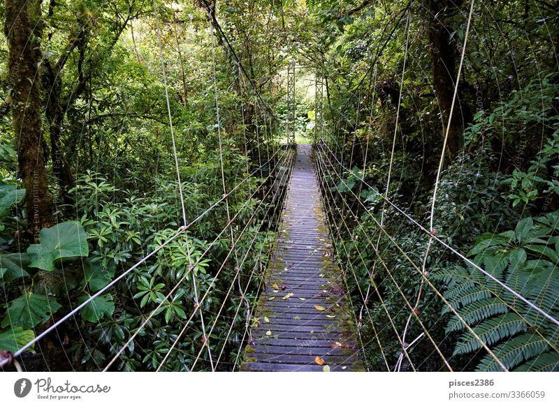 Bridge through Juan Castro Blanco National Park Ferien & Urlaub & Reisen Ferne Natur Abenteuer Tourist tree tropic vacations tropical scenic Feldrand forest
