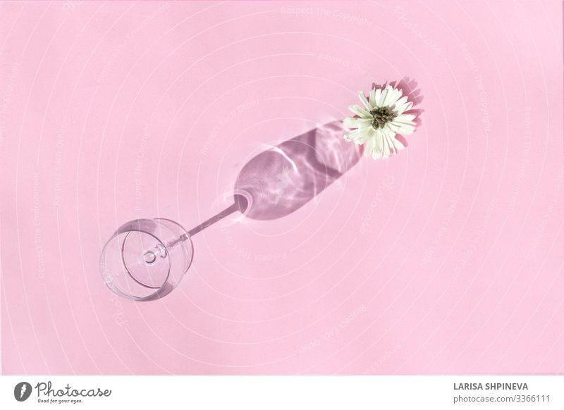 Leeres Weinglas mit Blume auf Schatten auf rosa Hintergrund Getränk Alkohol Reichtum Design schön Leben Dekoration & Verzierung Feste & Feiern Kunst Herbst Mode