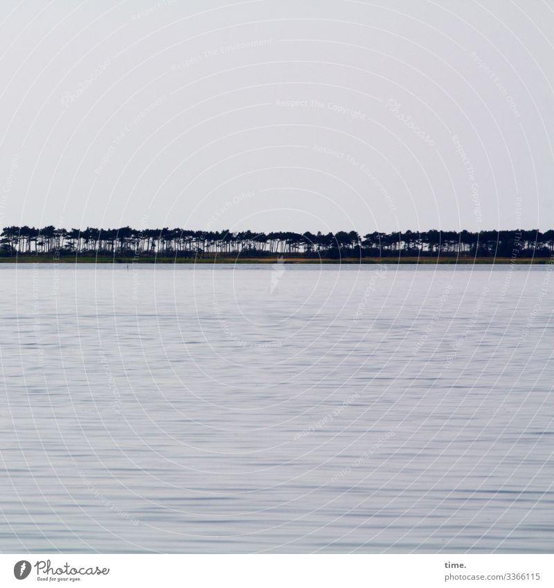 Küstenwache Umwelt Natur Landschaft Wasser Himmel Horizont Baum Baumreihe Küstenschutz Kiefer Wellen Strand Ostsee Wachstum maritim nass Kraft Sicherheit Schutz