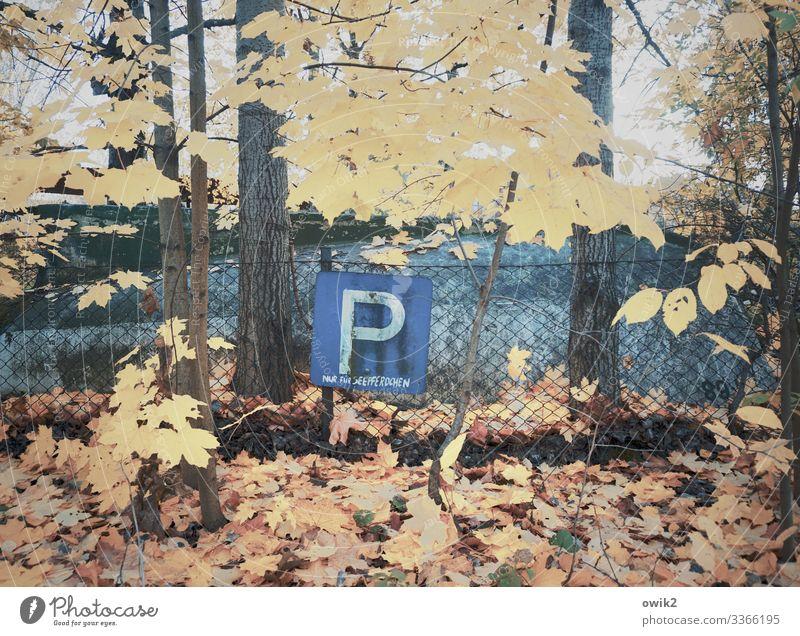 Exotenparkplatz Umwelt Natur Pflanze Herbst Schönes Wetter Baum Blatt Parkplatz Maschendrahtzaun Metall Zeichen Schriftzeichen Schilder & Markierungen