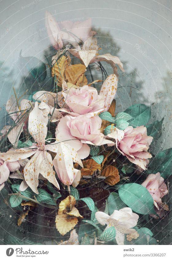 Falsche Blumen Wolken Baum Blatt Blüte Kunstblume Glas Kunststoff alt dreckig rosa türkis Traurigkeit Trauer Tod falsch Friedhof angeordnet Glasscheibe