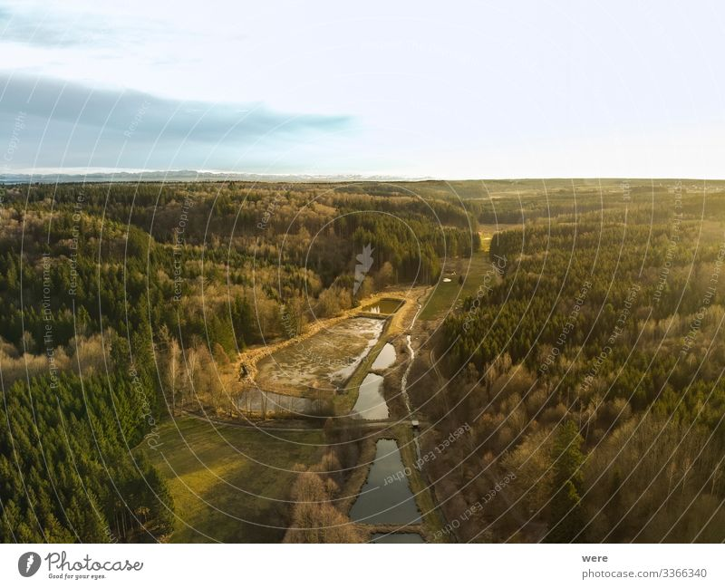 Bird's-eye view of Augsburg's Western Forests Natur Landschaft Wald Hügel gigantisch Augsburg Western Forests Burgwalden Fish farming animal bird copy space