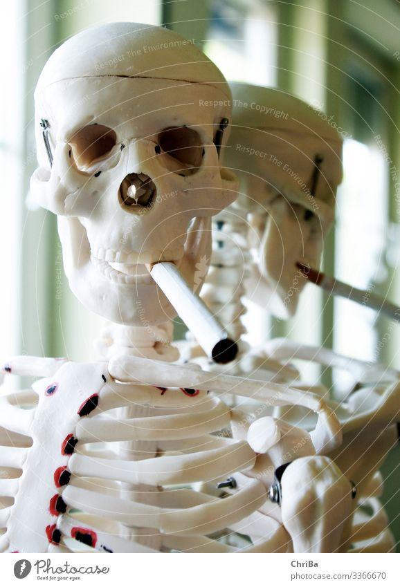 Rauchendes Skelett Mensch Zigarette Anatomie alt dünn Fröhlichkeit Krankheit Klischee trashig weiß Sorge Tod dumm Drogensucht trotzig Schwäche Sucht Verfall