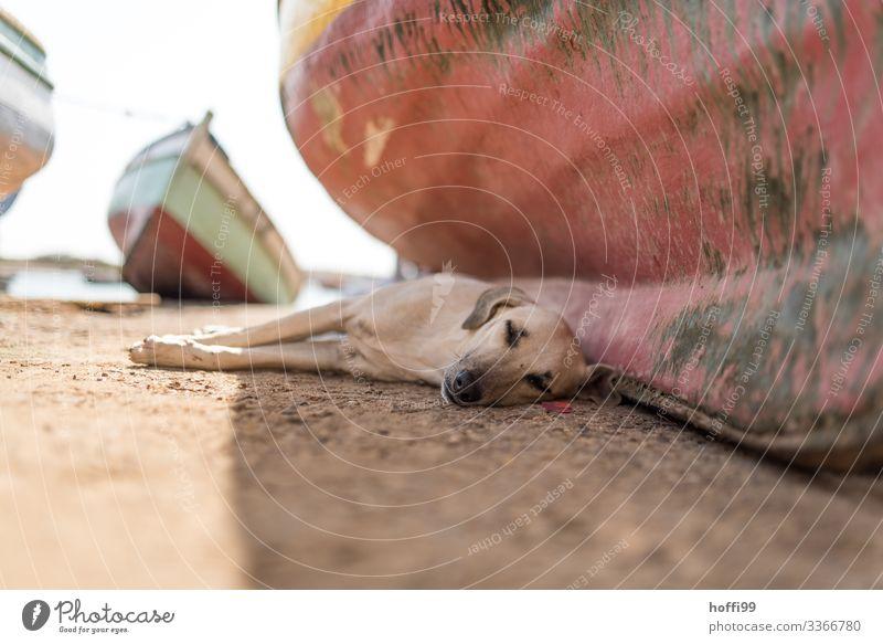Pause - nach dem Mittag ... Schönes Wetter Küste Meer Atlantik Fischerdorf Platz Hafen Fischerboot Hund 1 Tier liegen schlafen warten authentisch heiß hell