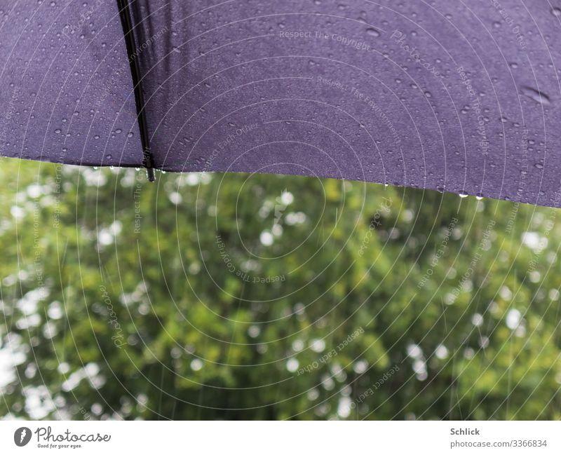 Regenwetter Urelemente Klima Wetter schlechtes Wetter Baum Regenschirm nass grau grün weiß Wasser Flüssigkeit Wassertropfen Textilien Schutz Schirm Unschärfe