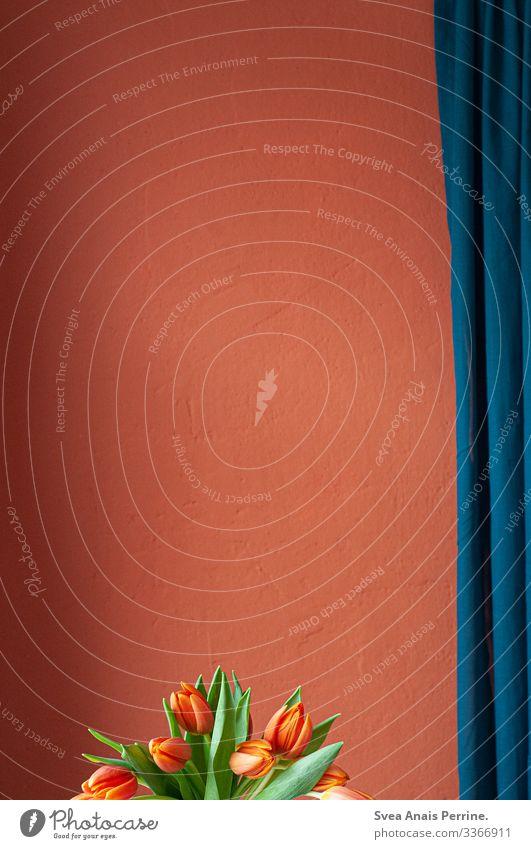 Wandfarbenkollektion - Rot Reichtum elegant Design Wohnung Innenarchitektur Dekoration & Verzierung Möbel Pflanze Tulpe Mauer Gardine modern blau rot ästhetisch