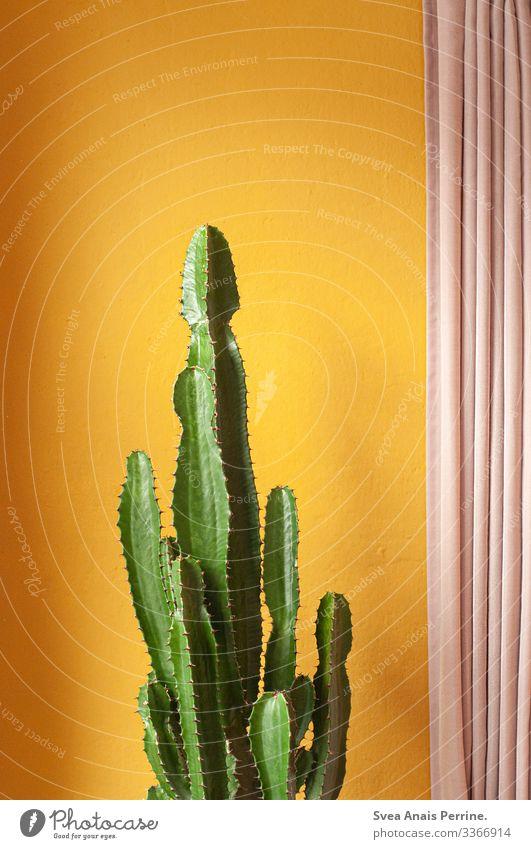 Wandfarbenkollektion - Gelb Stil Design Pflanze Kaktus exotisch Architektur Mauer Gardine außergewöhnlich trendy gelb gold rosa Farbe einzigartig
