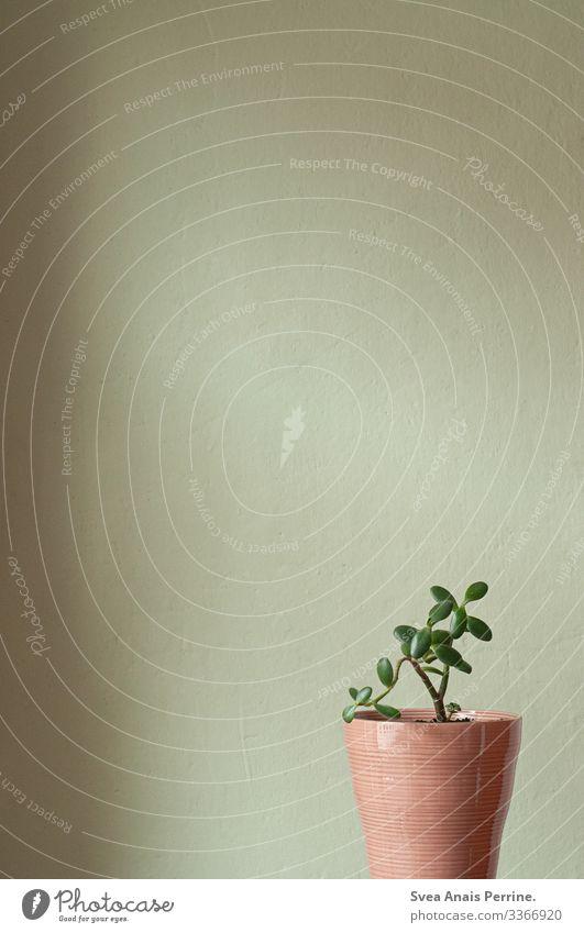 Wandfarbenkollektion - Hellgrün Pflanze Blumentopf Mauer modern natürlich rosa Design Häusliches Leben Innenaufnahme Innenarchitektur Farbfoto Gedeckte Farben
