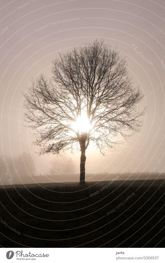 guten morgen Natur Landschaft Sonne Sonnenaufgang Sonnenuntergang Sonnenlicht Nebel Baum leuchten Freundlichkeit hell natürlich Gelassenheit ruhig Beginn Ast