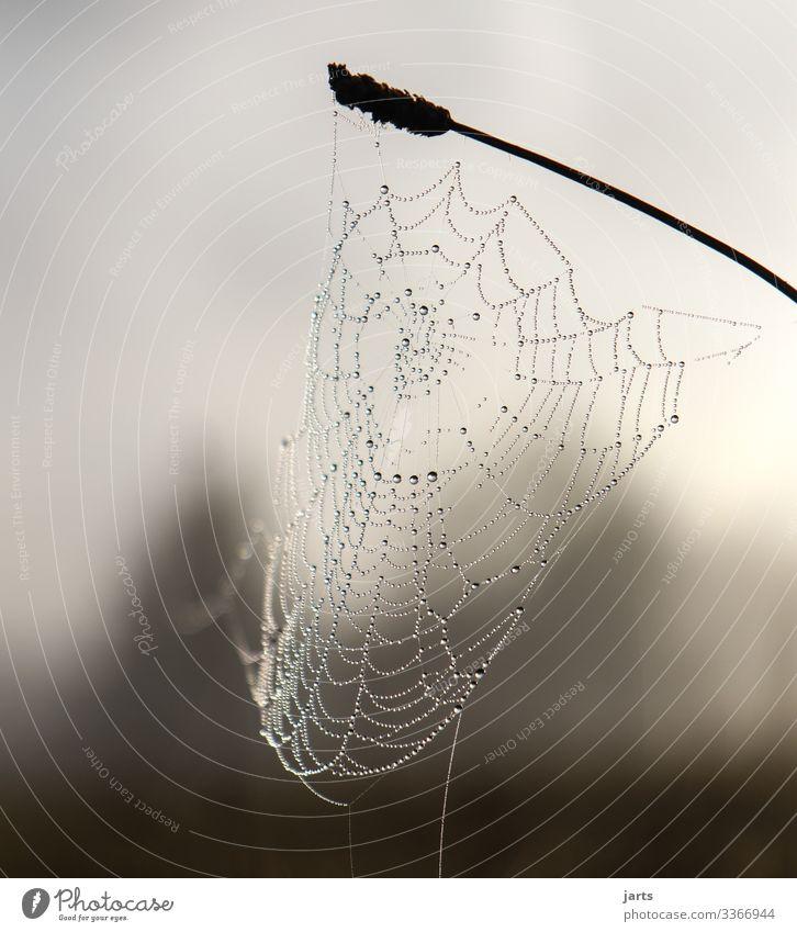 vernetzt Natur Nebel Pflanze Gras Wiese Wald frisch nass natürlich Tropfen Netz Spinnennetz Gedeckte Farben Außenaufnahme Nahaufnahme Detailaufnahme