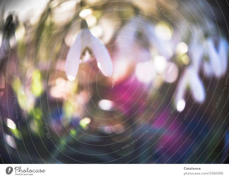 Photochallenge | Schneeglöckchen und Gummibänder unscharf weiß grün Umwelt Natur Pflanze Himmel Wildpflanze Blüte Blatt Blume Frühling Garten Park Wiese