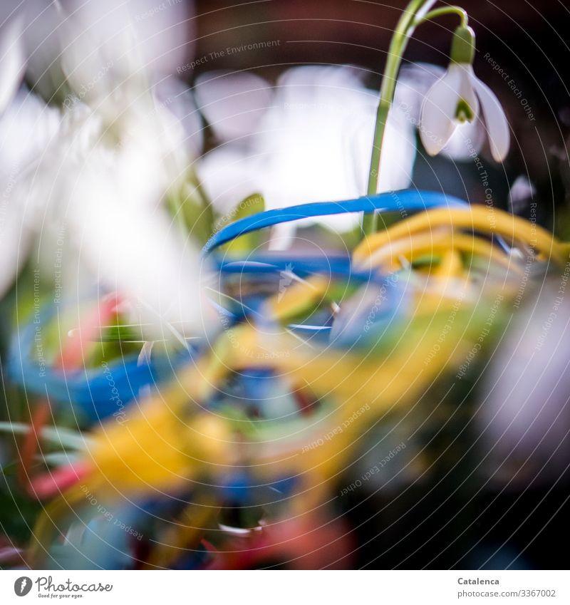 Photochallenge | Gummibänder und Schneeglöckchen Winter Zentralperspektive Textfreiraum unten Schwache Tiefenschärfe Tag Nahaufnahme Makroaufnahme Menschenleer