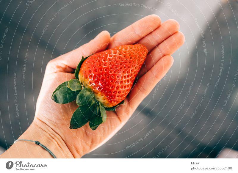 Ein Mensch, der eine große gepflückte große Erdbeere in der Hand hält im Sonnenlicht lecker haltend Erdbeeren rot Gesunde Ernährung Frucht Gesundheit
