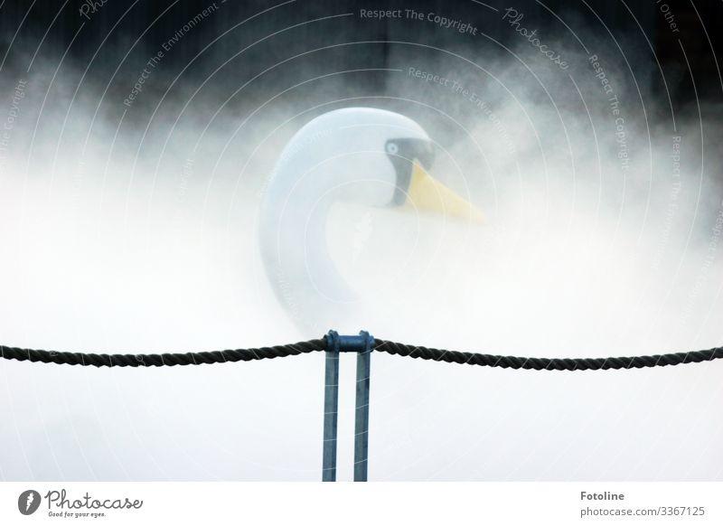 Verborgen im Nebel Natur hell nah nass natürlich gelb schwarz weiß Tretboot Schwan Seil Farbfoto Gedeckte Farben mehrfarbig Außenaufnahme Nahaufnahme