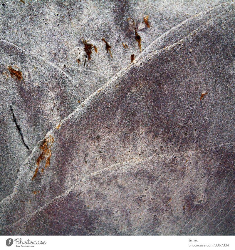 Lebenslinien #124 Umwelt Natur Landschaft Sand Wassertropfen Pflanze Strand Ostsee Wasserlinie Linie maritim Ausdauer Neugier Interesse Überraschung Bewegung