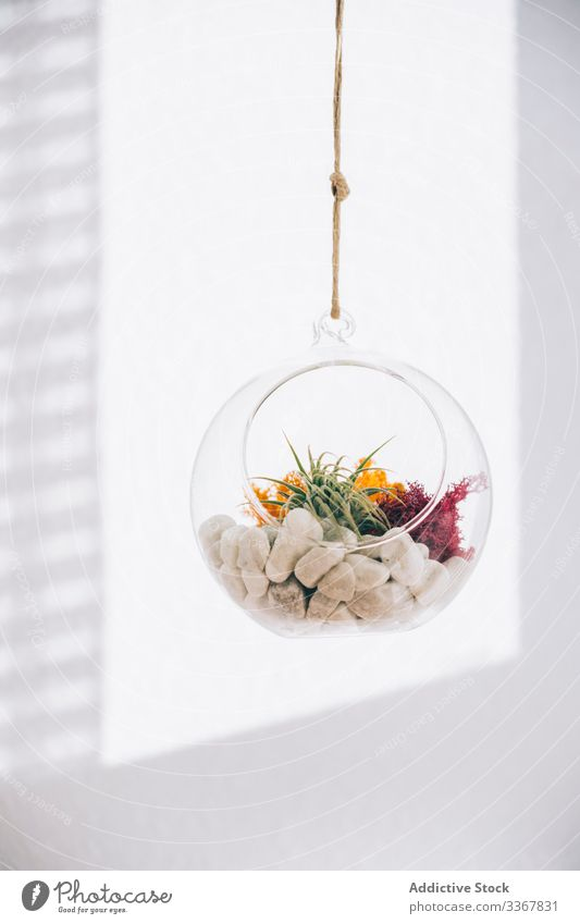 Dekorative Pflanzen im Glaspflanzenterrarium dekorativ Terrarium kugelrund Sukkulente farbenfroh hängen durchsichtig Blume organisch Zusammensetzung Flora grün
