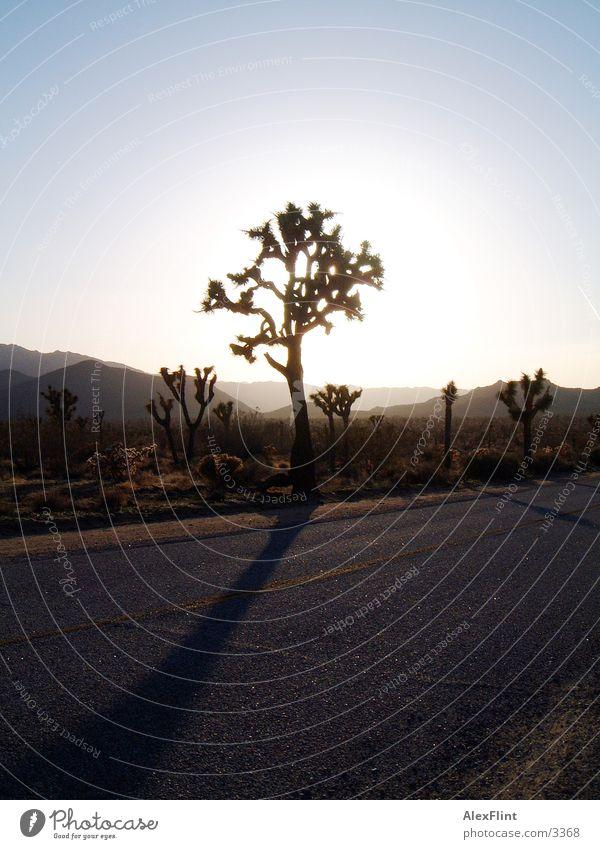 road 66 Baum Straße Route 66 Landstraße Wüste Gegenlicht Sonnenlicht Vor hellem Hintergrund Menschenleer