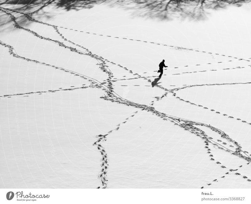 Wintersport Sport Fitness Sport-Training Joggen Fußballplatz maskulin Junge Junger Mann Jugendliche Erwachsene 1 Mensch 13-18 Jahre Schönes Wetter Schnee laufen